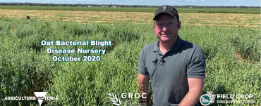 Mark McLean in the bacterial blight disease nursery