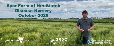 Mark McLean in the spot form of net blotch disease nursery