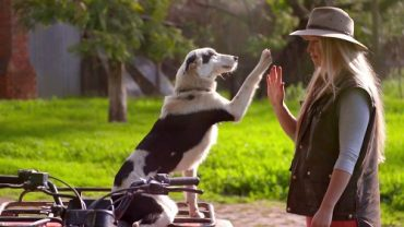 Country woman reaching to touch dog's raised paw