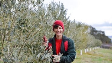 Gamila MacRury on her olive farm