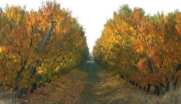 Goulburn-Valley-orchard-autumn