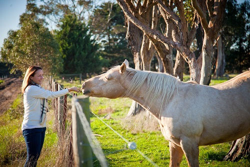 Becky Barker, Communications Manager for Victorian Rural Women's Network, feeds grass to a horse in a paddock