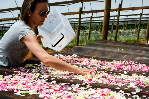 Jocelyn Cross sorts flowers on a table from her edible flower business