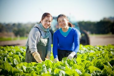 Two female agricultural workers stand together in a field of vegetables