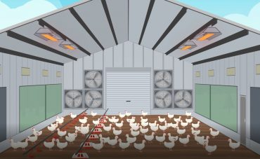 Individual picture from an animation of chickens in a shed.