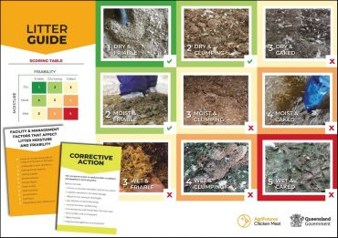 The Chicken shed litter guide poster.