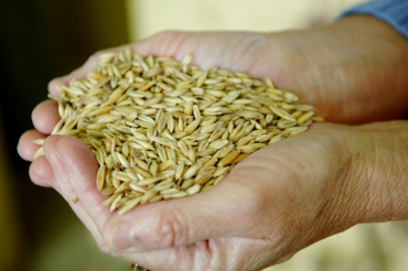 Photo of person holding grain