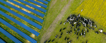 Aerial photo of dairy cows next to solar panels