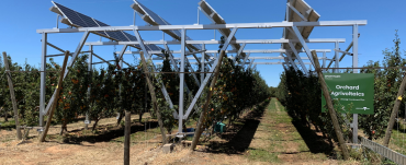 Solar panels over a pear orchard