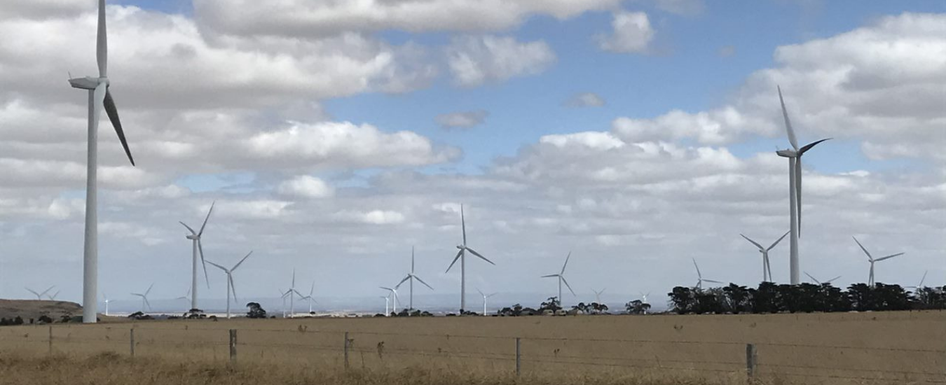 Wind turbines in a paddock