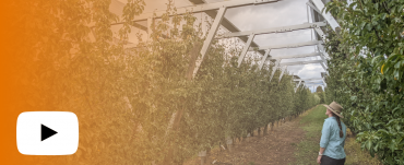 Girl looking up at solar panels over an orchard