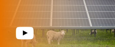 Sheep grazing around solar panels with an orange wash over & play button