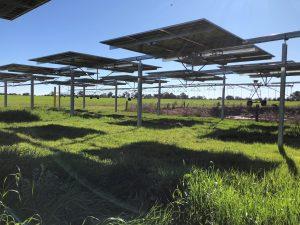 Tracking solar panels at Michael Gaffy's no.2farm