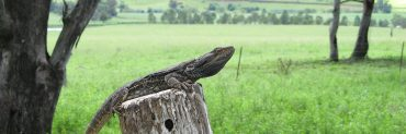 lizard on tree stump