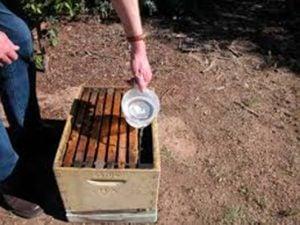 Pouring sugar syrup into a frame feeder