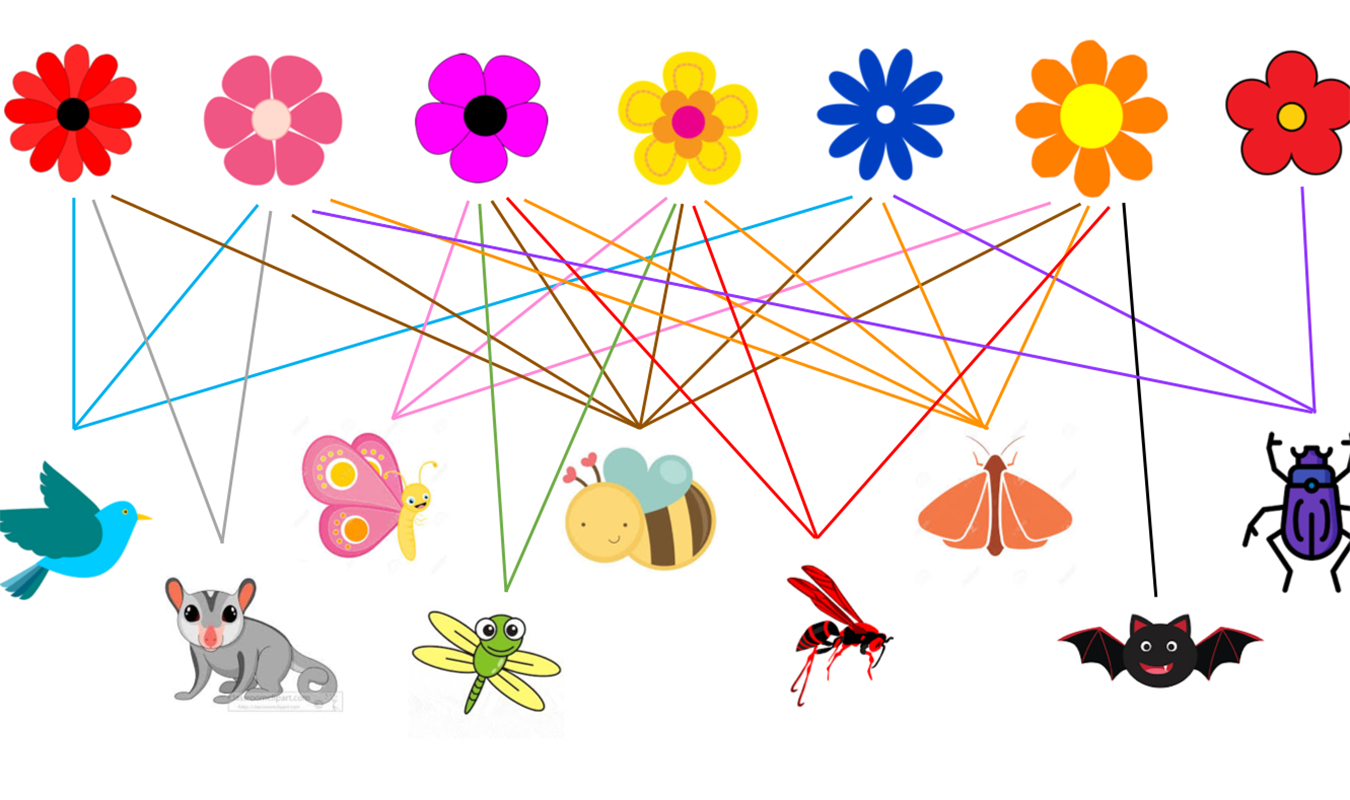 pollination network