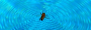 bee swimming