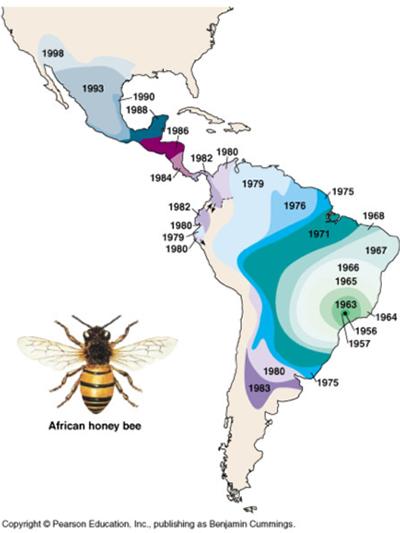 Killer bee spread