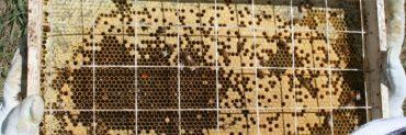 bee grid