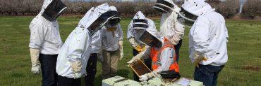 beekeepers training