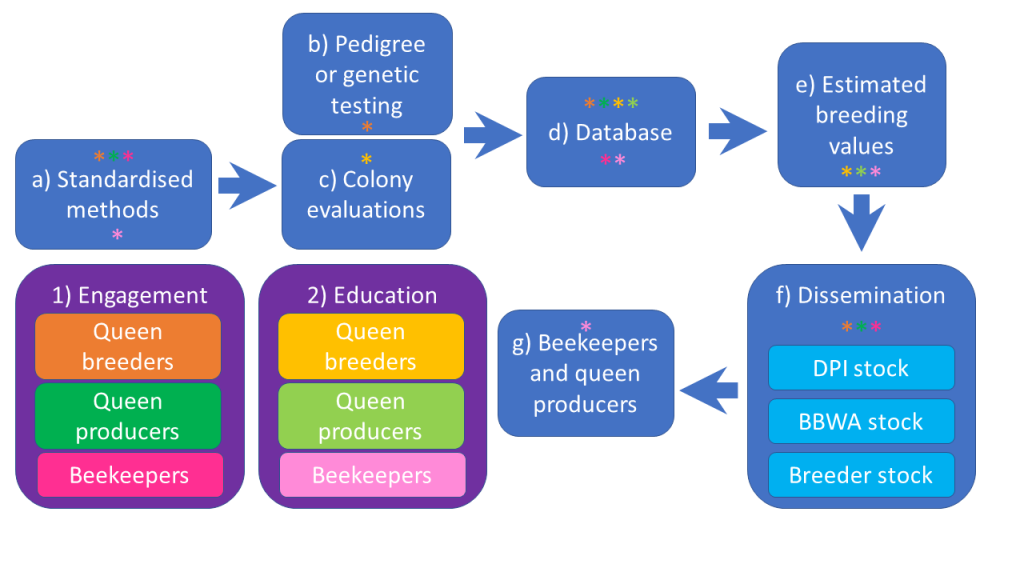 Plan bee diagram