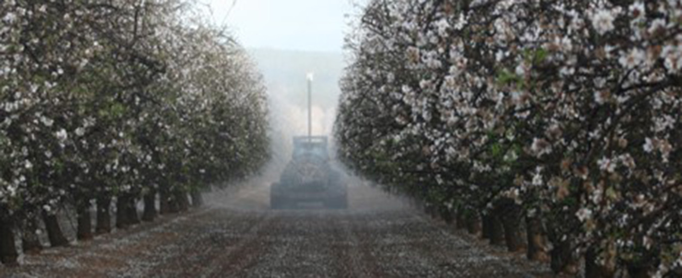 Fungicide spray application in an almond crop