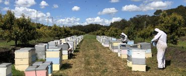 beekeepers attending hives