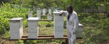 Pacific Island beekeepers breeding queen bees