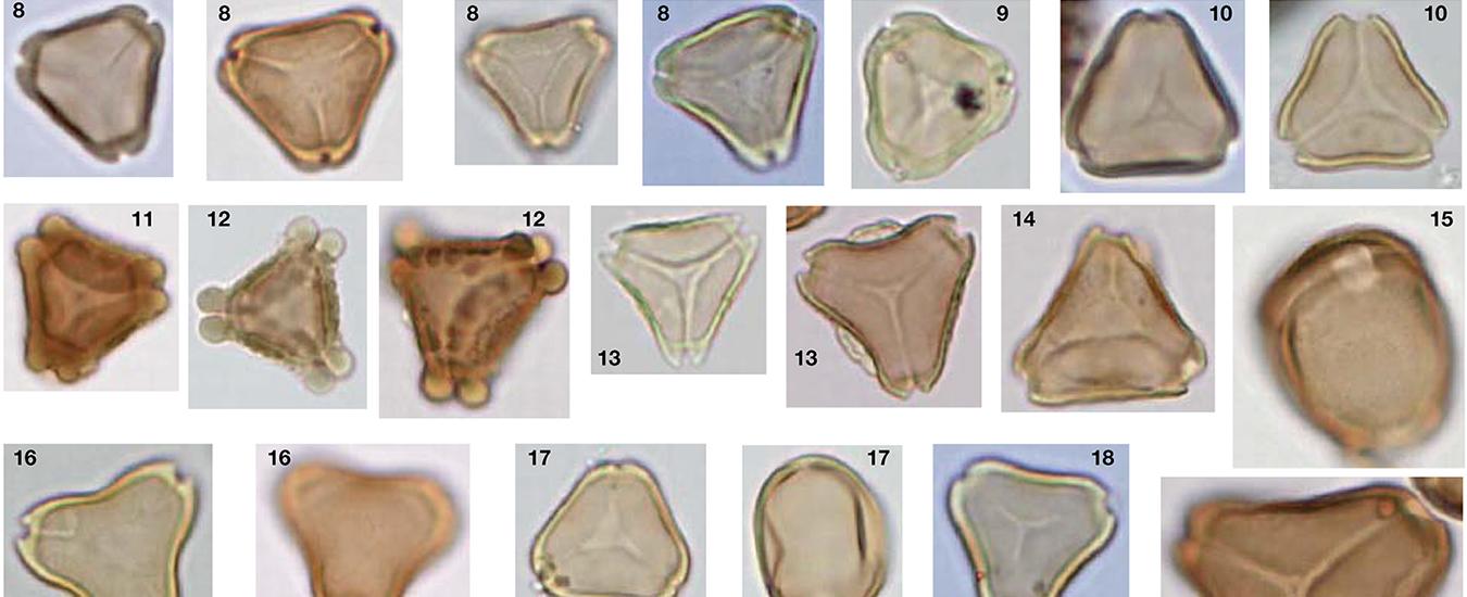 Myrtle pollen diversity in Australian honey