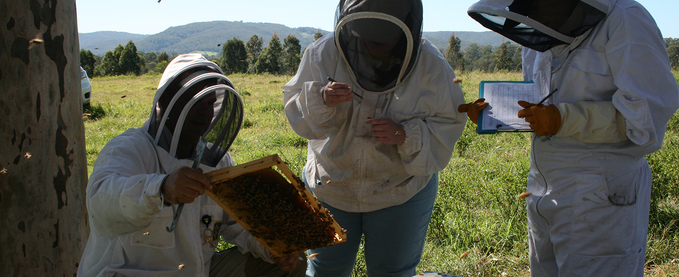 Beekeepers inspecting hives
