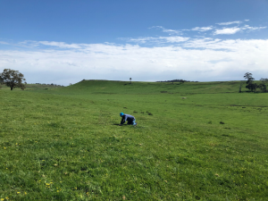 Pasture at the Baynton site in 2019 showing the view of the hilly country side of central Victoria.