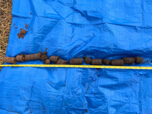 Soil core from the Birchip paddock, which highlights a gradual change in soil characteristics down the profile.