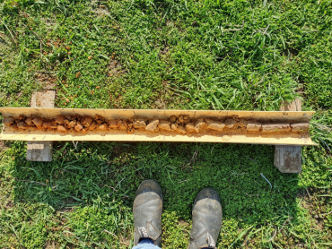 Soil core from the Harrow paddock, which highlights a gradual change in soil characteristics down the profile.