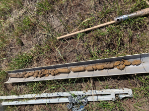 Soil core from the Bairnsdale paddock, which highlights a gradual change in soil characteristics down the profile.