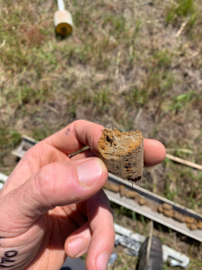 A piece of the soil core from the Bairnsdale paddock which has a plant root clearly growing into it.