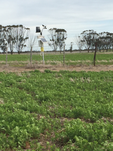 Weather station and telemetry unit of the Birchip soil moisture monitoring site located on the fence line between two paddocks.