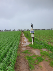 Weather station and telemetry unit of the Brim soil moisture monitoring site located between two paddocks.