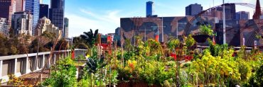 Community garden in Melbourne