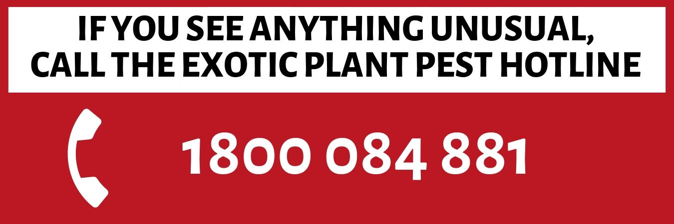 If you see anything unusual , call the exotic plant pest hotline 1800 084 881