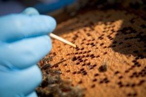 Matchstick honey sample