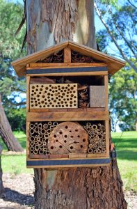 Bee hotel strapped to a tree in Australian parkland. Nesting area built from timber and natural materials to attract solitary native bees to Australian suburban gardens.