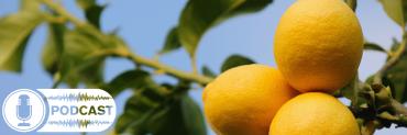 citrus tree with podcast icon
