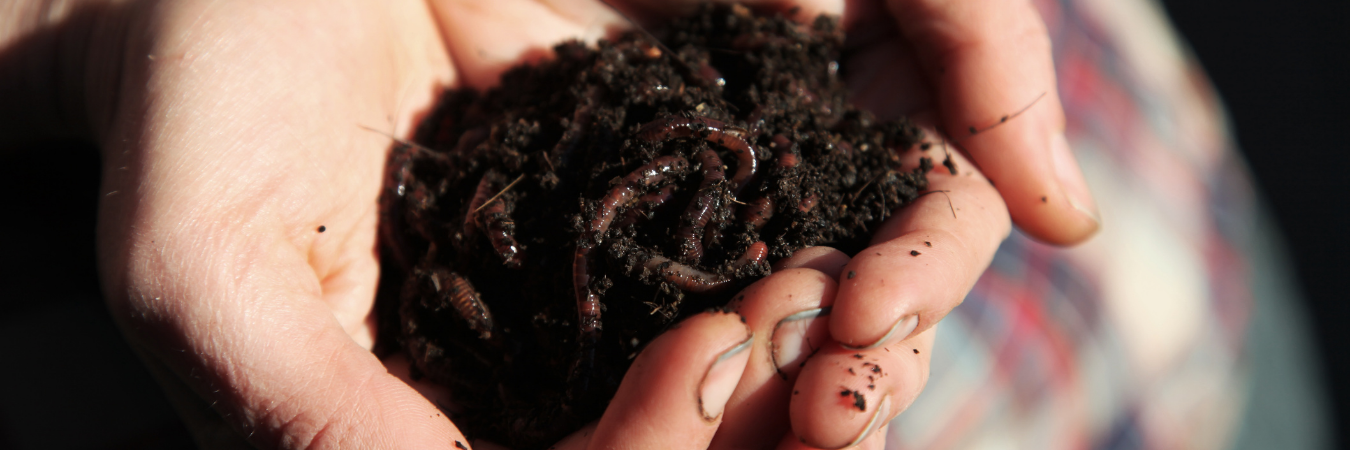 worms in compost soil in a persons hands