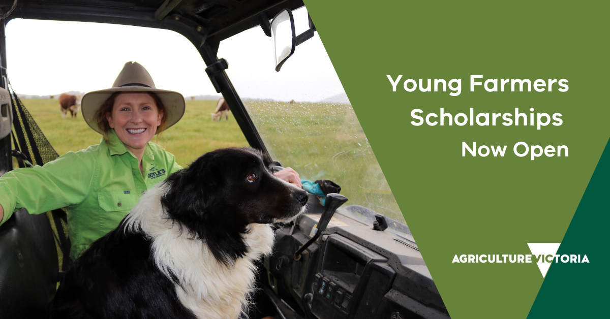 Young women and border collie sit in a farm vehicle. On the right side of the image there is text saying Young Farmers Scholarships Now Open and an Agriculture Victoria Logo
