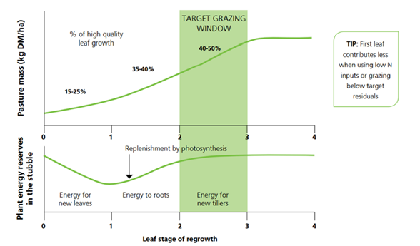 Figure 1. Graph of Ryegrass leaf to feed ratio