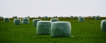 Silage bales in a paddock