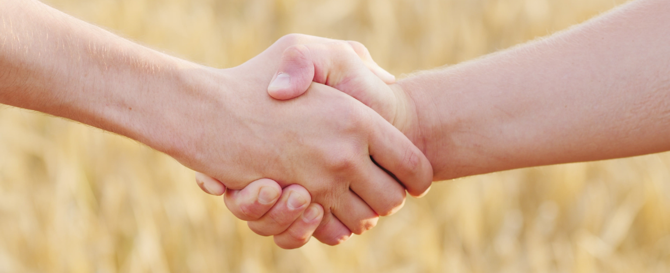 Image of two hands shaking in a grain paddock